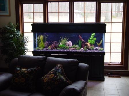 Simple Aquarium Design Images & Pictures - Becuo