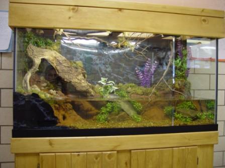 Archer Fish Tank | Kissyourfish Com Lehigh Valley Aquarium Fish Tank Maintenance Design