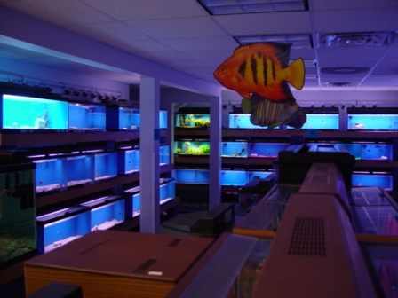 Aquarium store philadelphia reef inc philadelphia 39 s for Salt water fish store