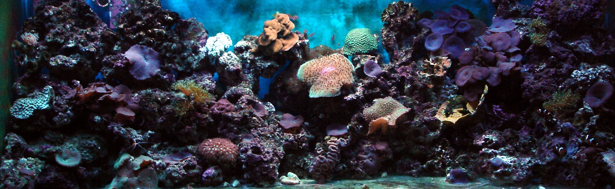 Coral reef animals lionfish wallpaper coral fish wallpaper coral reef